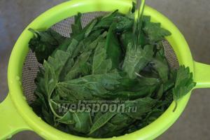Готовим крапиву. В рецепт пошло 130-140 г листьев крапивы с 2 средних пучков. Обрываем листья и промываем.