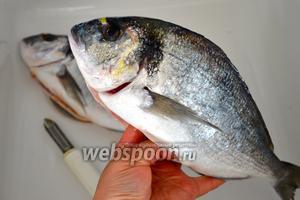 Рыбу первым делом очистить, выпотрошить и как следует промыть. Духовку включить разогреваться на 220°C.
