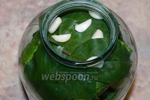 Сверху покрыть вишнёвым листом и добавить оставшийся чеснок, порезанный на дольки.