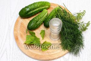 Чтобы приготовить свежепросольные огурцы в пакете, нам понадобятся огурцы, соль, листья смородины, чеснок, уксус, масло растительное и укроп.