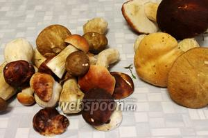 Грибы разберём: самые мелкие и крепкие отберём для маринования, чуть крупнее — для посола, как в рецепте  Белые грибы малосольные .