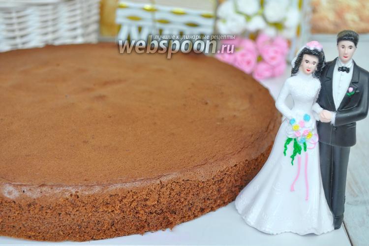 Фото Бисквит для большого торта
