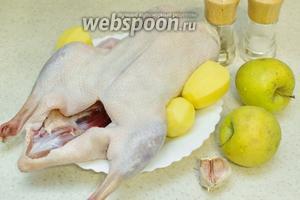 Для приготовления возьмите утку, яблоки, картофель, чеснок, соль, перец.