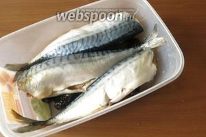 Кладём рыбу и заливаем остывшим рассолом. Выдерживаем в холодильнике 4 дня, периодически переворачивая тушки.