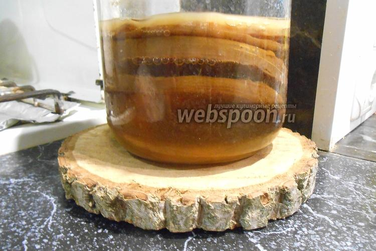 Фото Чайный гриб